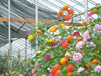 Greenhouse Pesticide Resistance Webinars:Cultural and Sanitation Techniques
