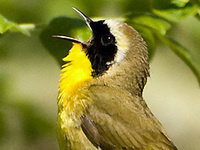 The Way West: Birding with a Microphone