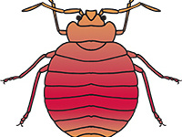 Bed Bugs: Current Status and What Individuals can do to Manage Them