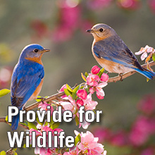 Sumter Backyard Landscaping Series: Part 2 - Gardening for Wildlife