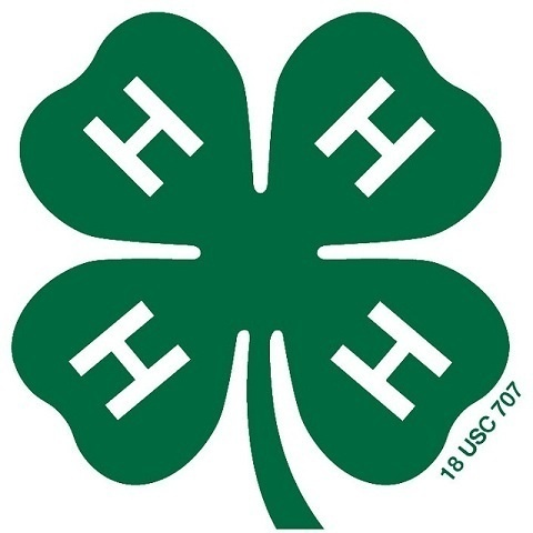 4-H Forestry Clinic