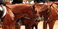 NCQHA District One AQHA Horse Show