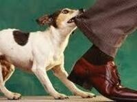 Canine Aggression:  Uncommon Solutions to a Common Problem