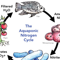Aquaponics Demo in Terrace Dining Hall - Friday, April 25th
