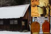 Maple Weekend At The Arnot Forest