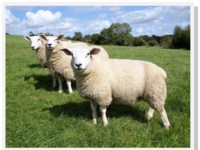 Small Ruminant Short Course - August 15, 2014
