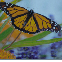Butterfly Release Memorial Service