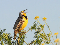 Sing with The Larks
