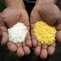 Nobel Laureate Richard Roberts Speaks about Golden Rice