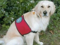 Therapy Dog International:  Enjoy a visit from Holly