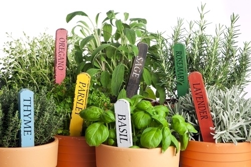 Garden Creativity: Grow A Herb Garden