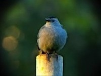 Birders, The Central Park Effect