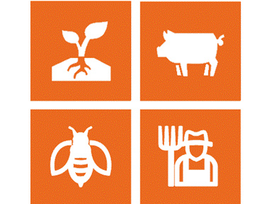 Managing Cucurbit Diseases & Insect Pests in Organic Production Systems