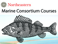 Marine Studies Consortium Courses - Seats open Fall 16