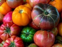 Heirloom Tomato Festival!