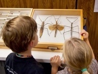 Insectapalooza with GRF Phil