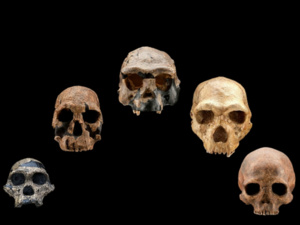 Exploring Human Origins: What Does It Mean To Be Human?