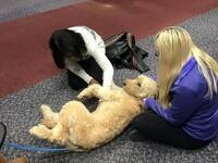 Take a break with Therapy Dogs!