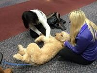 Therapy Dogs @ the Western Campus Library