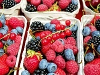 Protected Culture Workshop for Berry Growers