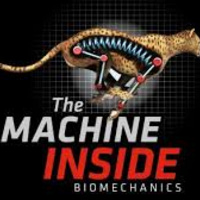Biomechanics:  The Machine Inside