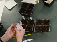Eagle Bluff Skills School - Seed Starting for the Mindful Gardener