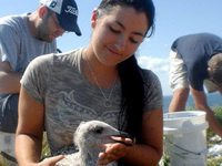Of Islands and Undergrads: A decade of bird study in the Isles of Shoals