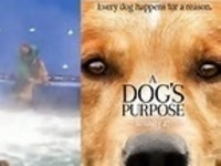 A Dog's Purpose with House Fellow Dr. E-K and GRF Anne