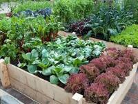 Public Workshop Series: Organic and Sustainable Gardening @ Walla Walla Community College