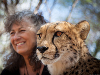 The Amazing Race… to Save the Cheetah