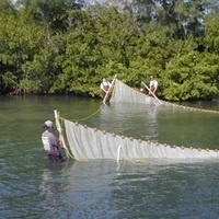 Lunch Bunch: Florida's Fisheries-Independent Monitoring Program in Apalachicola Bay- David A. Gandy