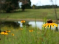 Green Burial & Local Land Conservation: An Open House at Kokosing Nature Preserve