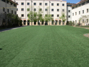 Ping Pong on the Turf
