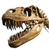 The Putnam Museum presents: Dinosaurs!