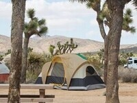Free Entrance Day at Joshua Tree National Park