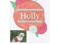Holly - International Therapy Dog