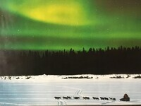 """The Iditarod: An Inside Look From the Perspective of a """"Trail Vet"""" by Dr. Norm Griggs Shepherd Spring Animal Hospital"""
