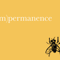 (im)permanence Exhibition Opening