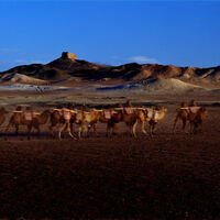 Silk Road Impressions: A Photographer's Journey on the Silk Road