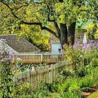 Colonial Gardens: Dye, Medicinal, & Household Plants, and Their Uses