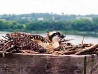 June Family Day at Iowa Raptor Project