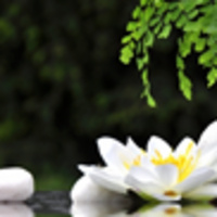 Restore and Relax - Westchester