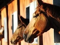 Biosecurity for Horse Farms & Effective Quarantine Procedures