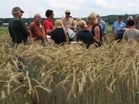 5th Annual Hudson Valley Small Grains Field Day