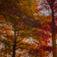 """Trees of the Arboretum"" photographs by Bo Lipari"