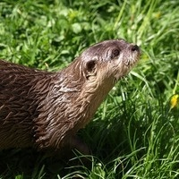 Return of the River Otter and Fisher