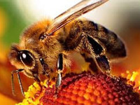NY Bee Wellness Workshop- Honeybee Disease & Management
