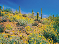 CAU travel program: Tucson, Arizona—Springtime in the Desert, with Cole Gilbert and Linda Rayor