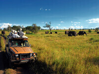 CAU travel program: Tanzania—A Great Migration Safari, led by David Toews