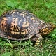 Nature Craft and Story: Box Turtle at Long Pond